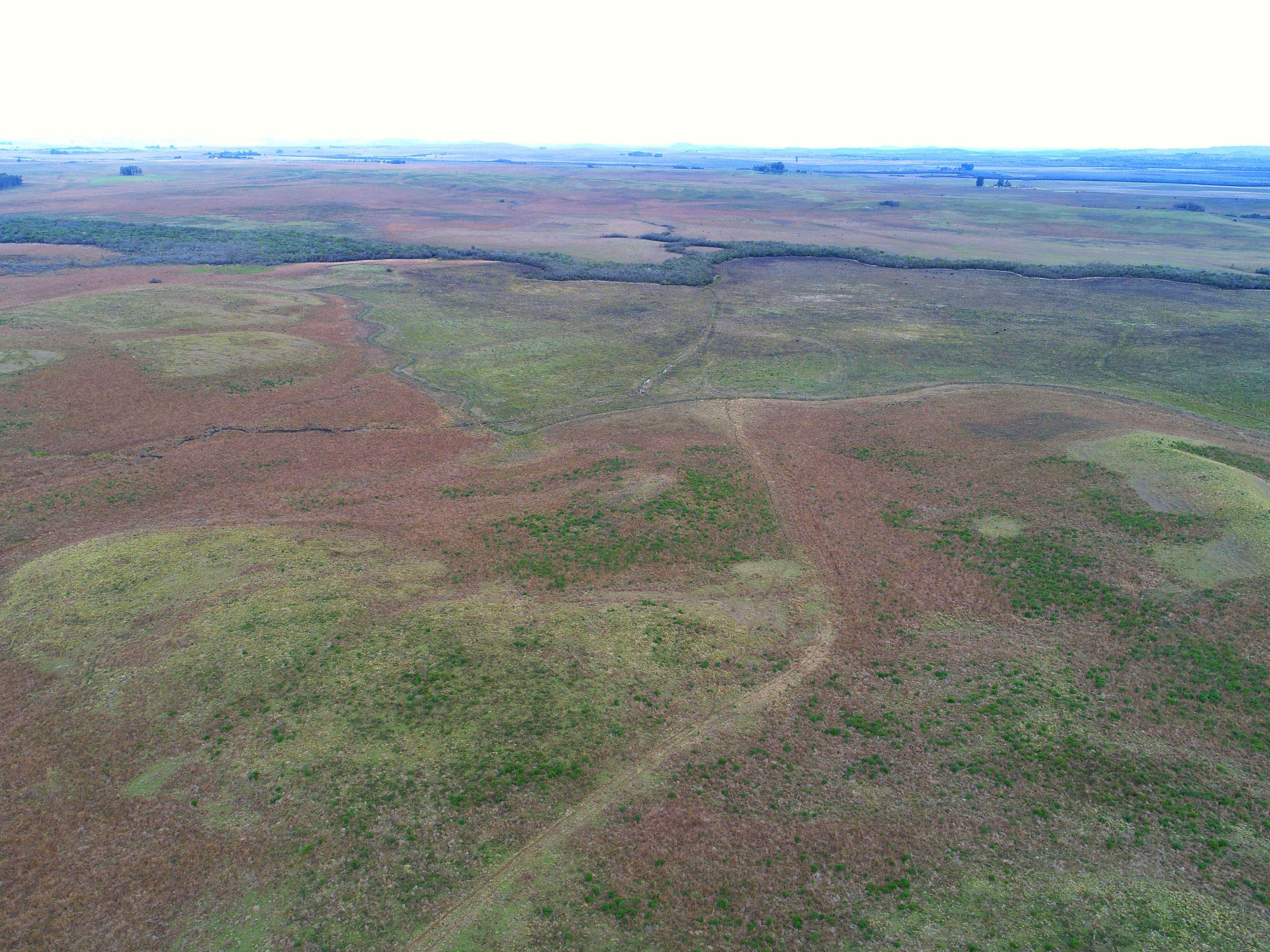 600 hectares de pecuária e arroz em Alegrete