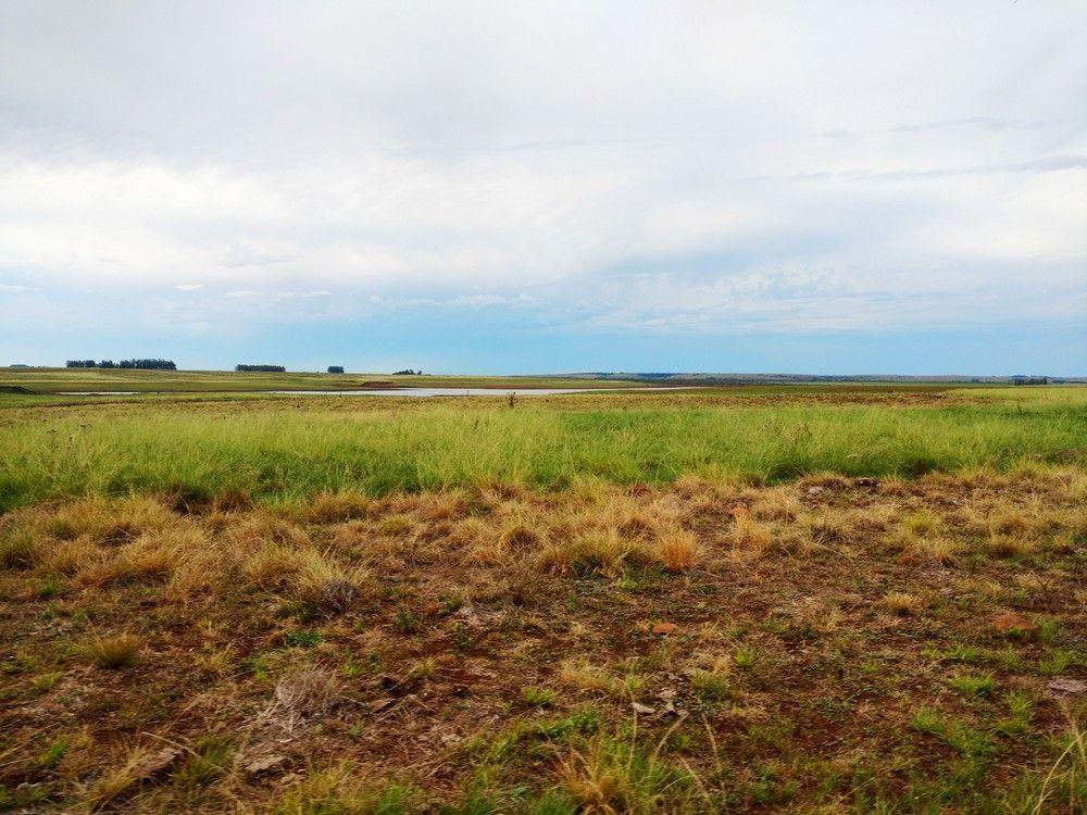 Fazenda 340 hectares arroz e pecuária em Alegrete/RS