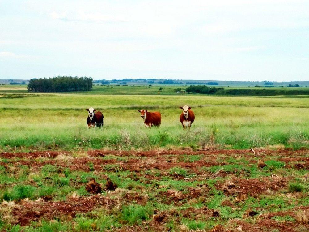 1100 hectares arroz e pecuária