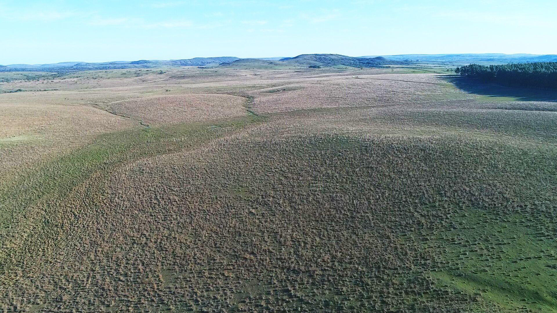 1100 hectare para soja, arroz e pecuária em Alegrete/RS