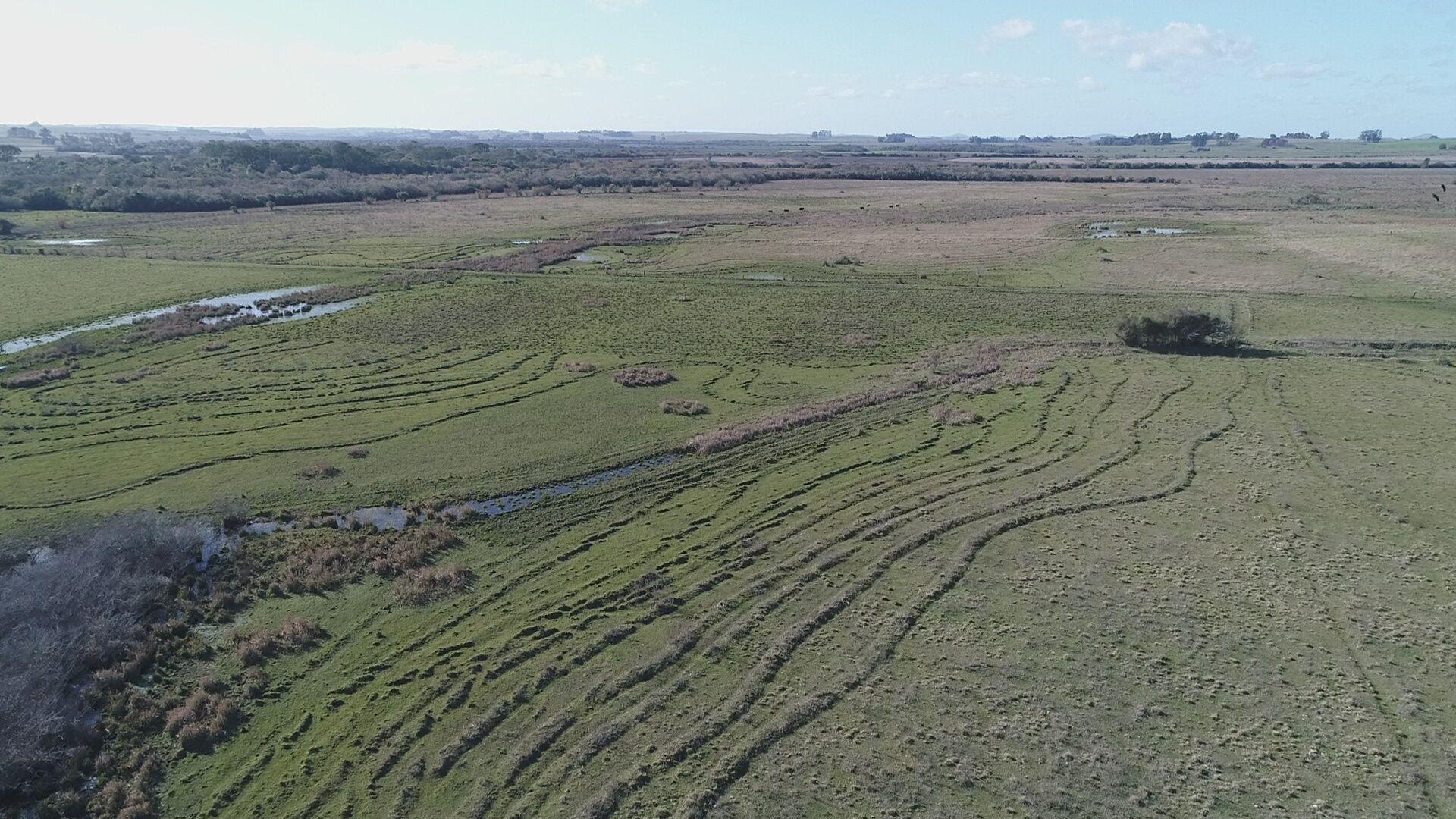 200 hectares com tripla aptidão em Alegrete/RS