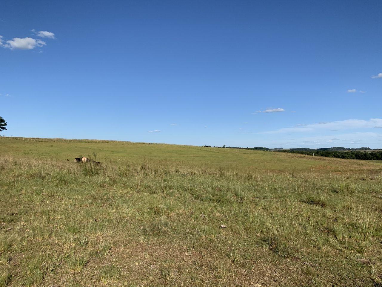 Propriedade a 3 km do asfalto para soja, pecuária ou arroz!