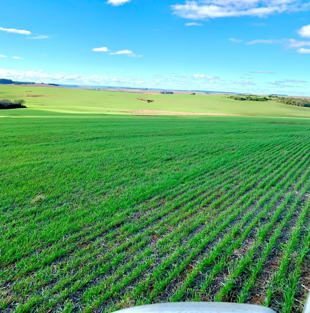 380 hectares - pagamento em soja.