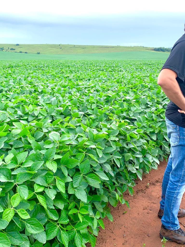 Fazenda com 400 hectares soja e pecuária entre Alegrete  e Rosário