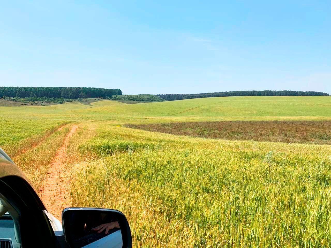 190 ha de terra argilosa - fazenda alegrete soja