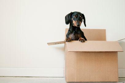 Pet no apartamento: dicas e cuidados para ter seu animal de estimação em casa