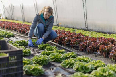 Empreender no campo: opções para se tornar um produtor rural