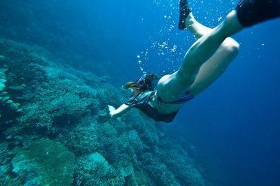 Melhores lugares para mergulhar em Bombinhas