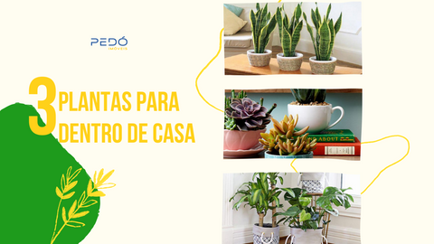 3 dicas de plantas