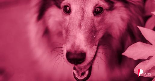 11 Plantas que Você Deve Evitar se Tiver Cachorros