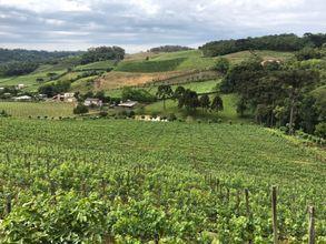 area-rural-bento-goncalves-imagem