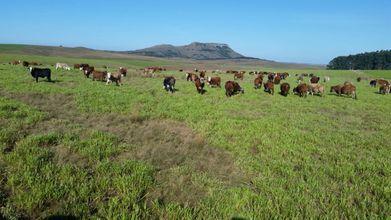 fazenda-santiago-imagem
