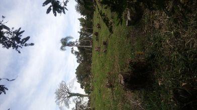 terreno-itaara-imagem