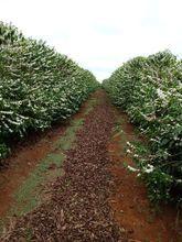 fazenda-rolandia-imagem